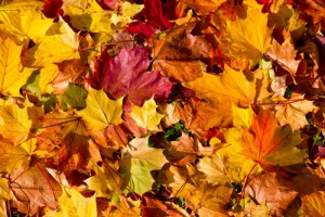 Big Events for Autumn and Winter